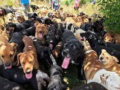 """A ONG """"Territorio de Zaguates"""" é um abrigo localizado na Costa Rica considerado um dos melhores lugares do planeta para um cão viver. - See more at: http://usenatureza.com/blog/2016/04/o-paraiso-dos-vira-latas-respeito-aos-animais/#sthash.TO7PwlC8.dpufo-paraiso-dos-vira-latas-respeito-aos-animais-zaguates-blog-usenatureza"""