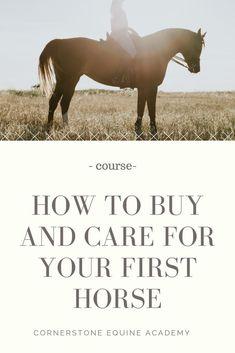 Online Equine Course – The Beginning Horse Owner - Best Equitation Horse