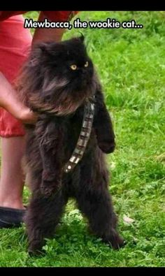 Mewbacca the  Wookie  cat...