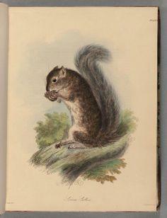 Vintage squirrel