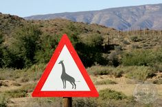 Giraffe Crossing Road Sign, Sanbona Wildlife Reserve, Warmwaterberg, Little Karoo, Route 62, Western Cape, South Africa, Africa