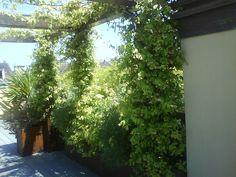 Realizzazione terrazzo verde - Milano (MI)