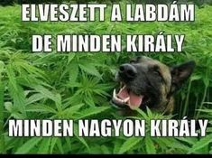 Nevada May Be Legalising Medical Weed for Your Pets Dog Pictures, Funny Pictures, I Love Sarcasm, Pets Movie, Puppy Dog Eyes, Puppy Care, Cool Pets, Working Dogs, Losing Me