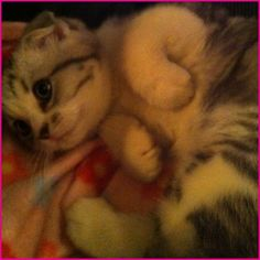 Taylor swifts cat! Meredith grey! this is seriously the cutest cat EVER!