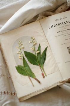 pressed and dried lily of the valley in an old book