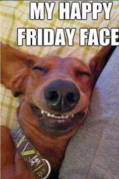 Happy Friday to You! Happy Friday to You! Happy Friday to You! Funny Friday Memes, Its Friday Quotes, Friday Humor, Friday Dog, Friday Pics, Tgif Funny, Friday Weekend, Friday Images, Happy Friday Pictures