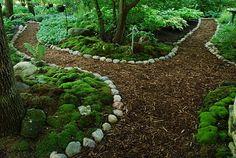 Dale's moss garden in Waukesha, WI