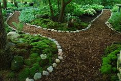mossy border- want the back of my yard to look like this!