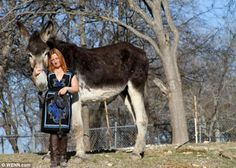 Romulus the Donkey, who is 68 in tall, has set a new Guiness World Record as the Worlds Tallest Donkey, after he beat the previous holder Oklahoma Sam by two inches That's one big ASS! Guinness World, The Donkey, World's Biggest, World Records, Worlds Largest, Animal Pictures, Donkeys, Photos, Creatures