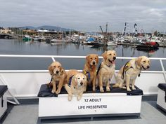Check out these 5 adorable service pups that went out whale watching with us!    Now through October 31st, 2014 - like us on Facebook and receive an entry for every share, like, & comment combo for a chance to WIN a whale watching trip for 2 along with a $20 food voucher for the galley and a $20 gift shop voucher for the 2015 season!  We MUST hit 5,000 likes on the Facebook page to hold the drawing - INVITE EVERYONE!  https://www.facebook.com/islandadventureswhalewatching?ref=hl