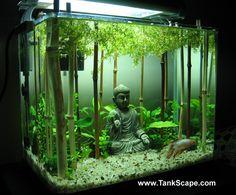 "Interesting use of bamboo & ""canopy"" of water plants – Solitary beta within ""meditative"" habitat"