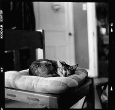 Cat By Jimmy Voyer