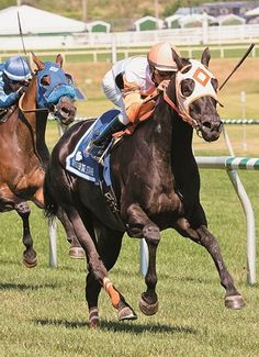 Ben's Cat wins the $60,000 Mister Diz Stakes for a sixth straight year at Laurel Park on August 22, 2015.