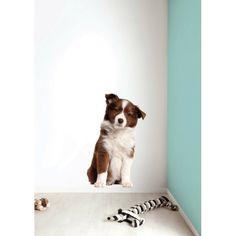 bordercolly puppy2-700x700.jpg (700×700)