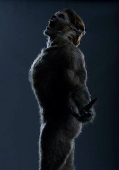 """It's #WerewolfWednesday again and here's Jason Momoa as a werewolf in the upcoming film """"Wolves"""". In the movie, he….. …. sorry, looking at the photo of his fuzzy butt, I lost my train of thought.  (Thanks @BronzTiger on Twitter!)"""
