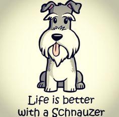 Miniature schnauzer #MiniatureSchnauzer