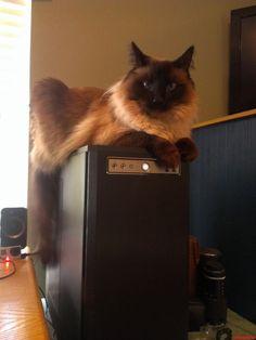 Kitty Perch - http://cutecatshq.com/cats/kitty-perch/