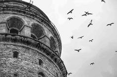 Remember the flight. The bird is mortal!   - Forough Farrokhzad   Photograher: Esra Demirtaş (instagram.com/alaimisemavi/)   #bnw #bw #blackandwhite #schwarzweiss #noiretblanc #siyahbeyaz #blancoynegro #biancoenero #monochrome #turkey #türkiye #istanbul #beyoğlu #karaköy #galata #galatatower #galatakulesi #birds #kuşlar #seagulls #martılar