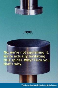 This spider fun