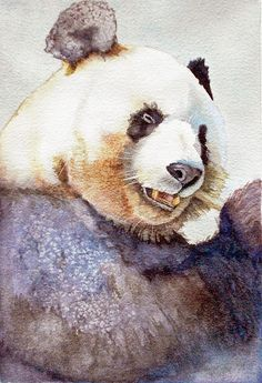 Panda Eating Painting by Bonnie Rinier - Panda Eating Fine Art Prints and Posters for Sale
