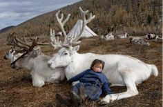 Fascinating Photos of Reindeer People Living in Mongolia
