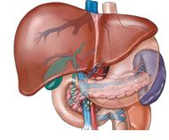 Looking for low cost Liver transplant surgery in India? Dr. Naimish Mehta (Senior Liver Transplant Surgeon) has experience of performing Liver transplants in Sir Ganga Ram Hospital, New Delhi.