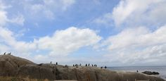 Sights in Cape Town – Boulders Penguin Colony. Hg2Capetown.com.