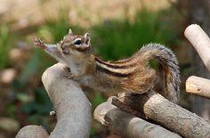 Wait please just one more nut pleeeaaasssseeee