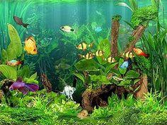 Aquarium Buyer's Guide: Complete Kits vs Individual Components Planted Aquarium, Aquarium Algae, Home Aquarium, Aquarium Filter, Tropical Aquarium, Saltwater Aquarium, Tropical Fish, Aquarium Ideas, Fish Aquariums