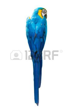 parrot: parrot bird isolated on white background Stock Photo