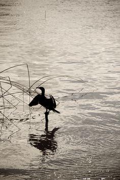 No solo danzan los cisnes by Cesar Ordóñez on 500px