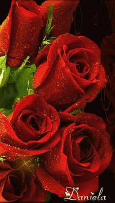 ✿ Roses