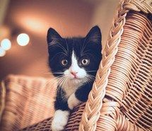Inspiring image adorable, animals, cat, cute, kitten #5029180 by winterkiss - Resolution 564x846px - Find the image to your taste