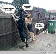 Lol cuties! This is definitely an example of my 2 Shepherds and my parents little dogs...