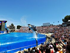 """Surfs Up in Sunny San Diego - Travel Channel: Tour the parks, beaches and botanic gardens that still make the """"birthplace of California"""" special. Sea World #SanDiego #travel"""