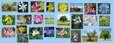 Flores de Bach: Que son y para que sirven las Flores de Bach . #floresdebach Mira mas en : www.hagamoscosas.com o en el facebook: www.facebook.com/hagamoscosas