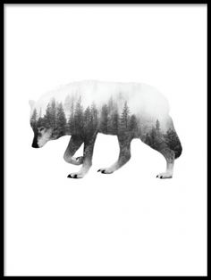 Forest Wolf b&w, poster. Svartvit plansch med varg. En snygg svartvit tavla med en varg och inslag av skog. Härlig fotokonst/illustration som passar utmärkt antingen själv eller som del i ett kollage. Du kan hitta fler tavlor med djur och natur i våra kategorier Fotokonst samt Insekter och djur.