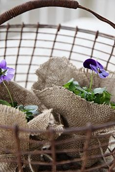 pansies, each wrapped in burlap and displayed in a basket, as a gift or party favor