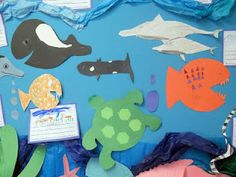 Ocean animals bulletin board