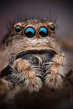 im probly the only person who thinks this is cute. Macro Fotografie, Fotografia Macro, Macro Photography, Animal Photography, Hyper Realistic Paintings, Jumping Spider, Life Form, Mundo Animal, Bugs And Insects