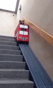 How fast to descend the steps for a dog #dogsfunnyhumor