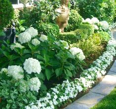 Hydrangeas, hostas, impatience, lambs ear.
