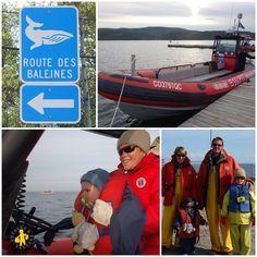 Voir les baleines dans le Saint Laurent (Québec)