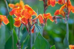 Here is a wide selection of beautiful summer plants which bloom profusely throughout the season without much pampering from you. Perennial Garden Plans, Flower Garden Plans, Garden Yard Ideas, Garden Projects, Backyard Ideas, Perennial Gardens, Fence Garden, Garden Trellis, Easy Garden
