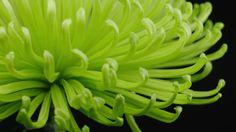 groene bloemen - Google zoeken