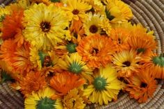I love bright orange Calendula! October's birthflower, they would look so cute bunched inside a tiny pumpkin, don't you think? Plus its anti-inflammatory properties are perfect for healing tea and skin cream!