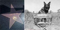L'histoire de Rintintin, le célèbre chien Lorrain - http://www.le-lorrain.fr/blog/2016/04/28/lhistoire-de-rintintin-celebre-chien-lorrain/