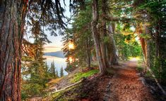 This path around Crater Lake winds this way and that. It occasionally opens up to a wide vista where I can see the lake and morning sun. But the path itself was quite nice with the sun slicing in through the early-yellow leaves. - Crater Lake, Oregon - Photo from #treyratcliff Trey Ratcliff at http://www.stuckincustoms.com/