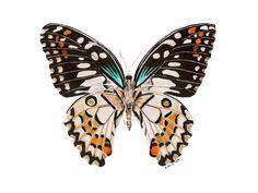 New to TinyToesDesign on Etsy: Garden Art Orange Butterfly Print Butterfly Painting Butterfly Art Butterfly Print Black Tan Minimalist Modern - 8.5x11 (15.00 USD) #nurseryart #tombowpro