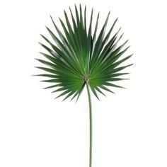 30-Silk-Fan-Palm-Leaf-Stem-Green-pack-of-12